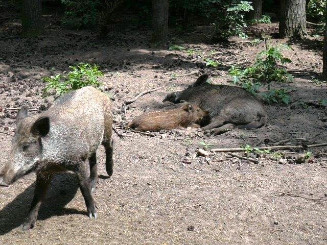 Парк дикой природы в Германии