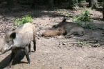 Парк Дикой Природы - Танненбуш: отдых в Германии